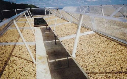 ứng dụng năng lượng mặt trời sấy nông sản